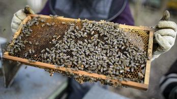 A tavalyi tömeges méhpusztulást vizsgálja a Nébih