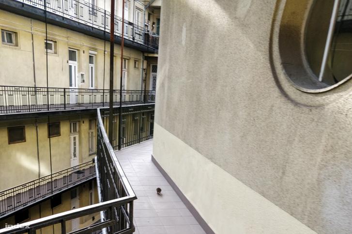 A XI. kerületben, néhány hete készült a felvétel egy gangon szaladgáló patkányról