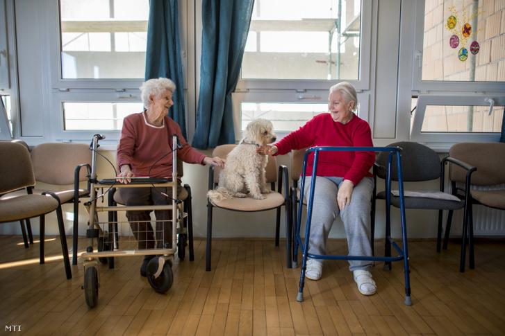 A Nudli nevű vizsgázott terápiás kutyát simogatja a pécsi Szent Lőrinc Gondozóotthon két lakója a Misina Természet- és Állatvédő egyesület terápiás foglalkozásán 2019. március 6-án