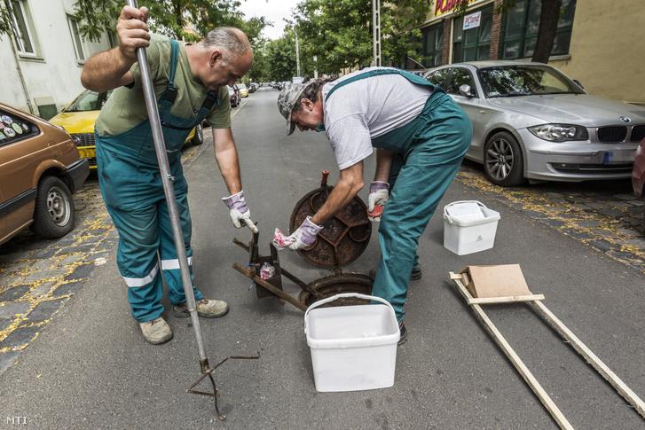 A Bábolna Bio Kártevőirtó és Szolgáltató Kft. patkányirtási részlegének munkatársai mérget és csapdát helyeznek ki a fővárosi XIII. kerületi Jász utcában 2016. augusztus 11-én.