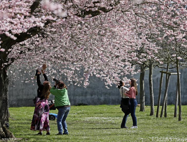 Látogatók virágba borult japán cseresznyefák alatt a schwetzingeni kastély parkjában 2018. április 3-án.
