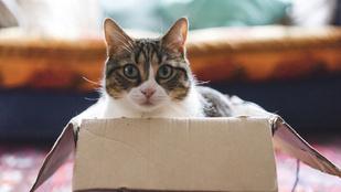 Így választ fekhelyet a macskád