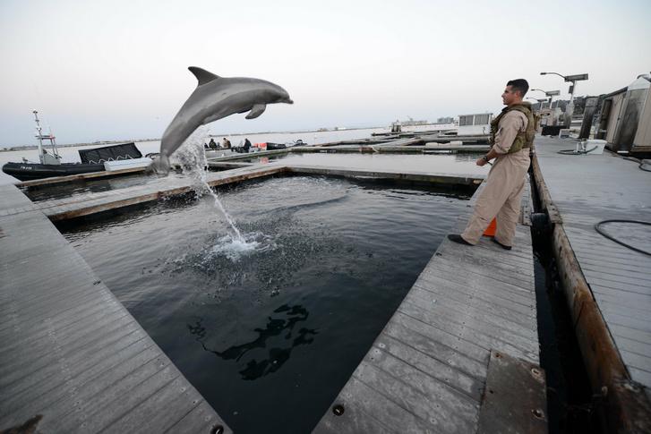Amerikai tengerész az általa kiképzett harci delfinnel