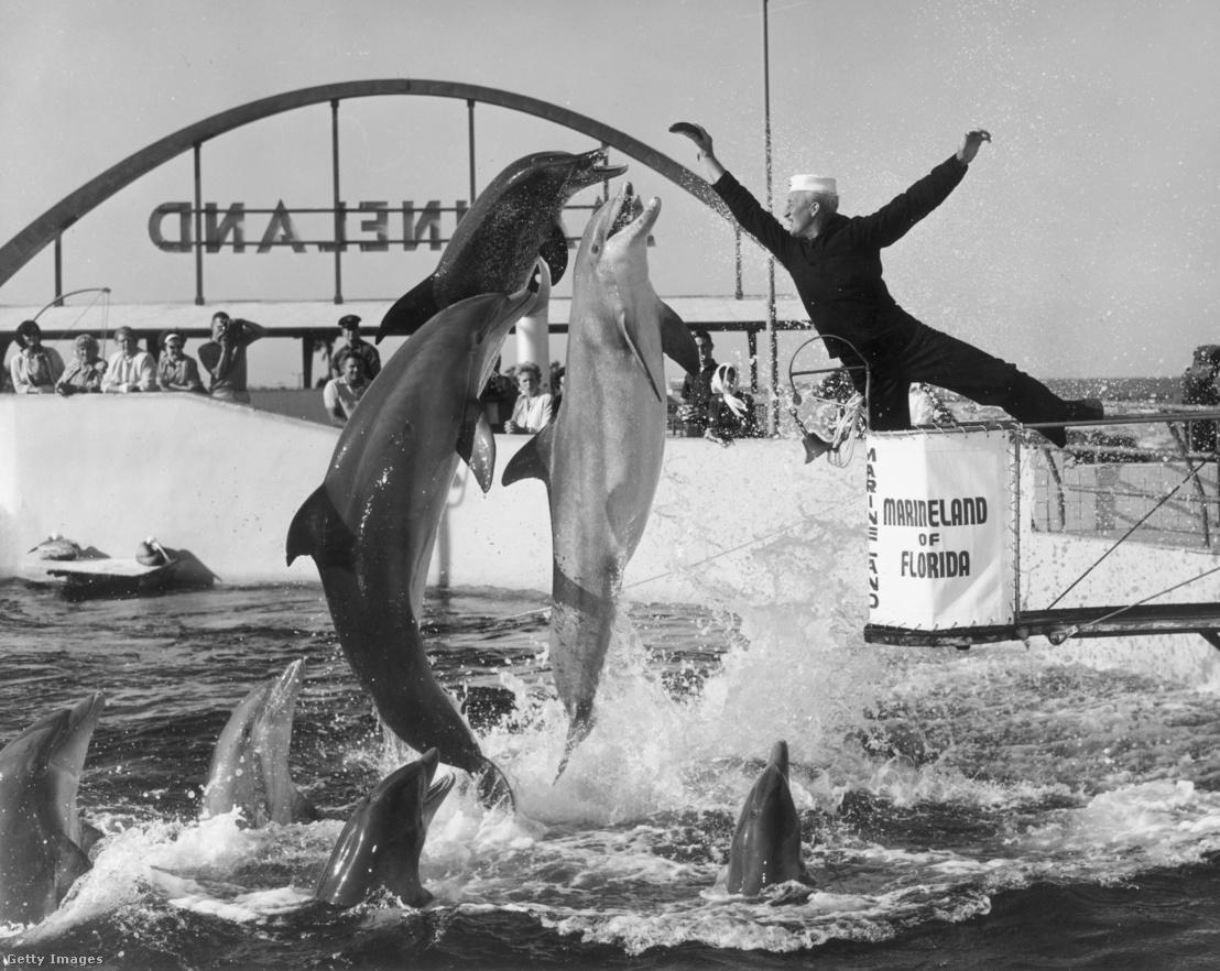 Delfinshow a floridai Marinelandben 1965 körül