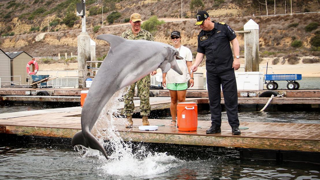 30atwar-dolphins-3-superJumbo