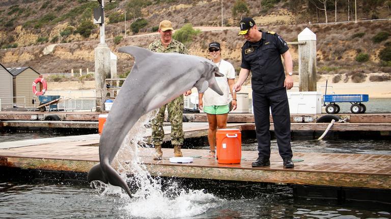 A harci delfinek kora nem áldozott le a hidegháborúval