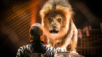 Beszüntetnék a vadállatok szereplését a brit cirkuszokban
