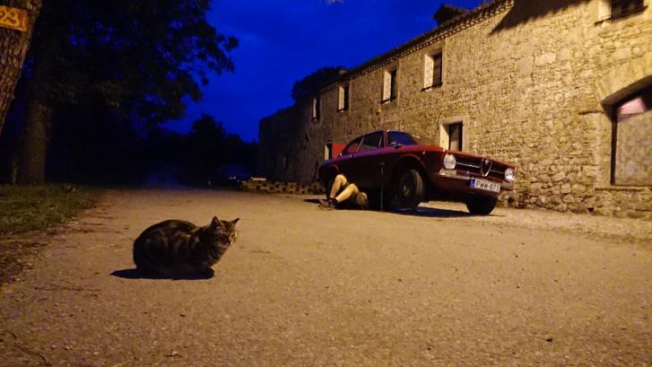 A képen látható macska, később odament megvizsgálni, hogy mi a franc olyan érdekes a kocsi alatt