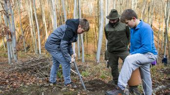 930 ezer facsemetét ültettek el az Ipoly Erdő Zrt. területén