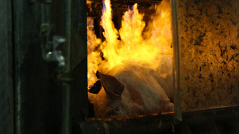 Magyarországon is drágulni fog a sertés a Kínában pusztító sertéspestis miatt