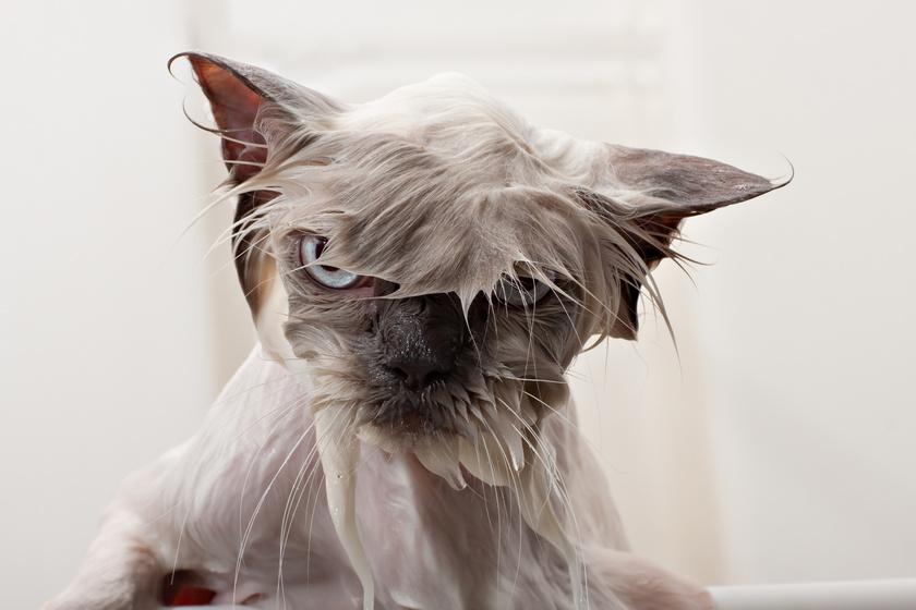 Miért utálják a macskák annyira a vizet? Logikusabb oka van, mint hinnéd