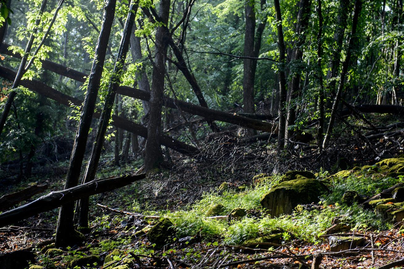 bukki-nemzeti-park