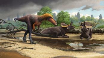 A T. rex törpe, gyilkos elődjét azonosították