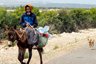 A marokkói utak szentháromsága: autósokra mosolygó fekete szamárháton, nyomában kutyával
