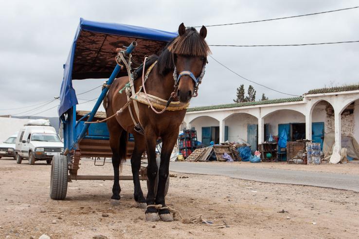 Az autó alatt ez a legnagyobb gazdagság. A legtöbb ilyen tákolt hintót amúgy szamár hajtja és laprugós, itt meg ló van és tekercsrugó - ritka páros