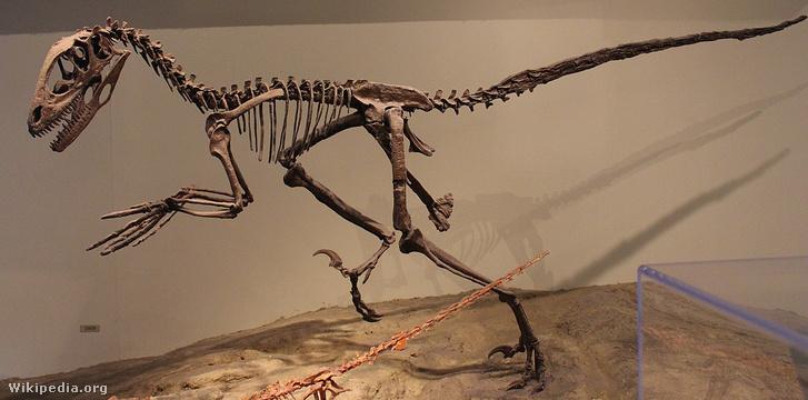 Deinonychus-csontváz