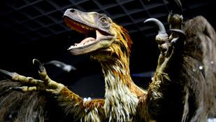 Igazságot a Velociraptornak!