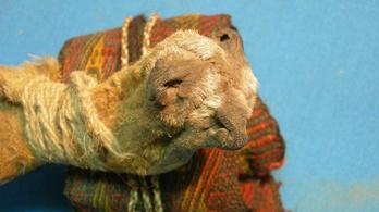 Ötféle kábítószert találtak egy rókaorrból varrt szütyőben
