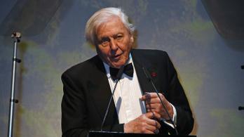 Ma 93 éves David Attenborough, az ismert zenei producer
