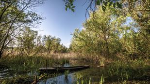 Tisza-tavi utazás a nádtenger varázslatos mélyére
