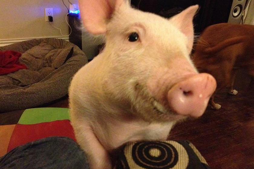 Esther ilyen aprócska volt, amikor gazdáihoz került. Itt még senki sem gondolta, hogy hamarosan mindenkit leköröz. Méretben legalábbis mindenképp.