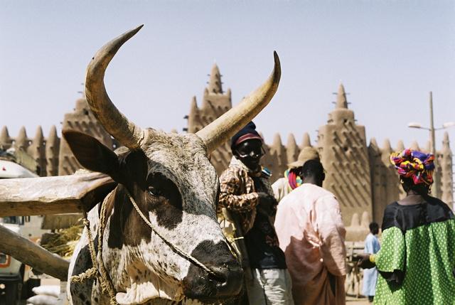 A dzsennei nagymecset, Mali.