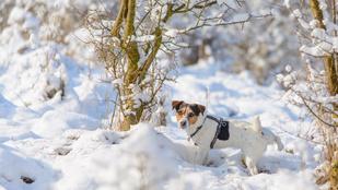 A kutya, ami az Északi- és a Déli Sarkot is lepisilte