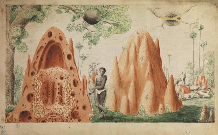 Henry Smeathman vízfestménye a felbontott termeszvárról és a munkát végző rabszolgáról (1781).