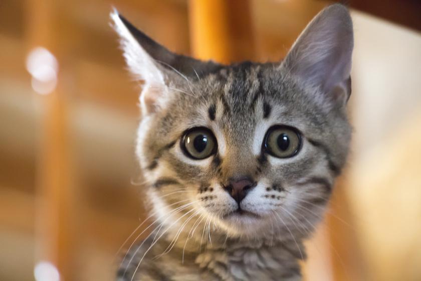 Miért szorong a költözéstől a cica, és hogy nyugtathatod meg? A legfontosabb, amit megtehetsz