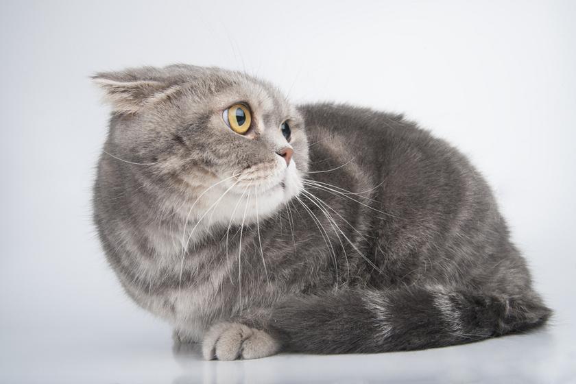 szorongo-cica