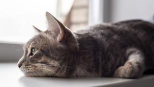 5 jel, amiből kiderül, ha depressziós a macskád