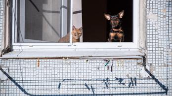 Átlag 20 ezer forinttal drágábbak az állatbarát albérletek