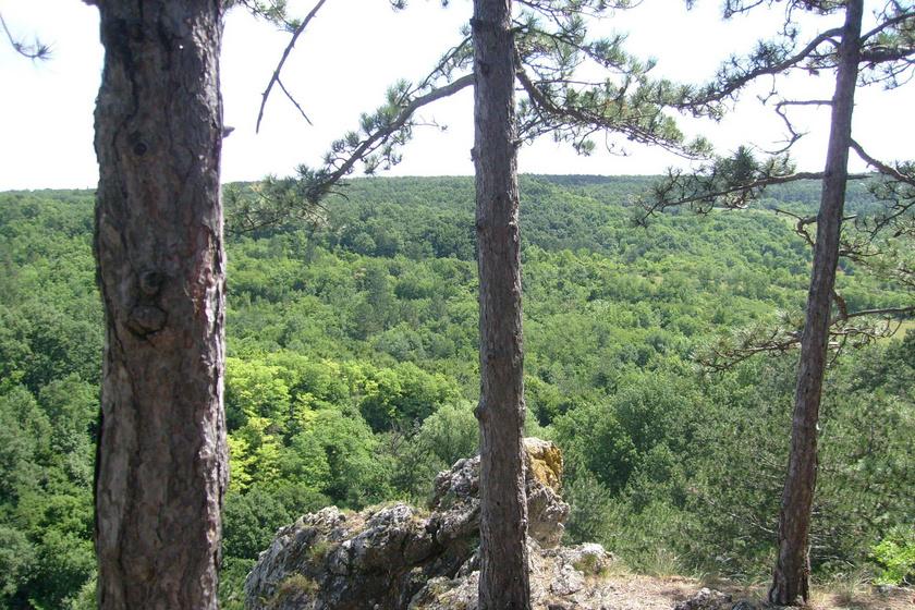 Egy-egy sziklára, magaslatra fel is vezet az út, innen pazar panoráma nyílik a Balaton-felvidék Csopak és Balatonfüred közötti részére.