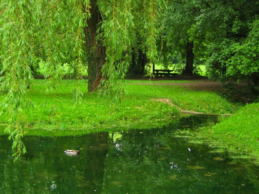 A Balatonba torkolló Koloska-patak helyenként tóvá szélesedik a zöld pompa ölelésében.