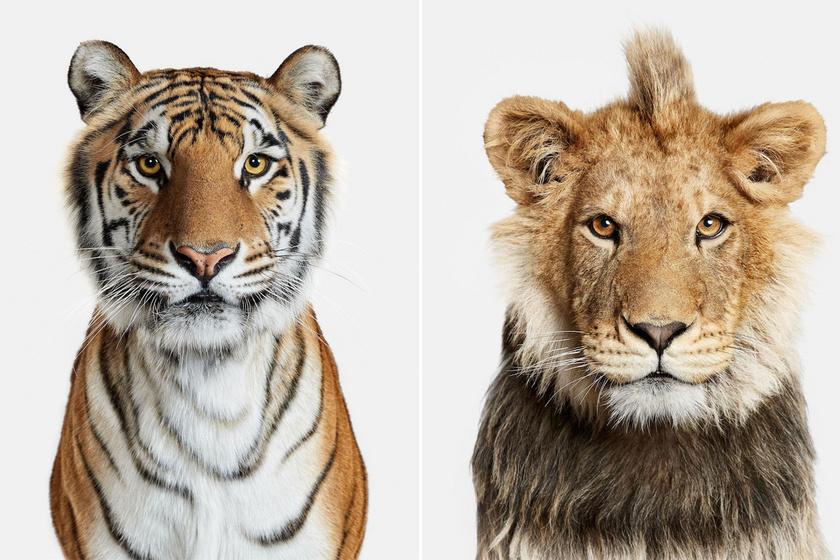 Erőteljes fotók az állatvilágból: egyetlen képen is átüt a személyiségük