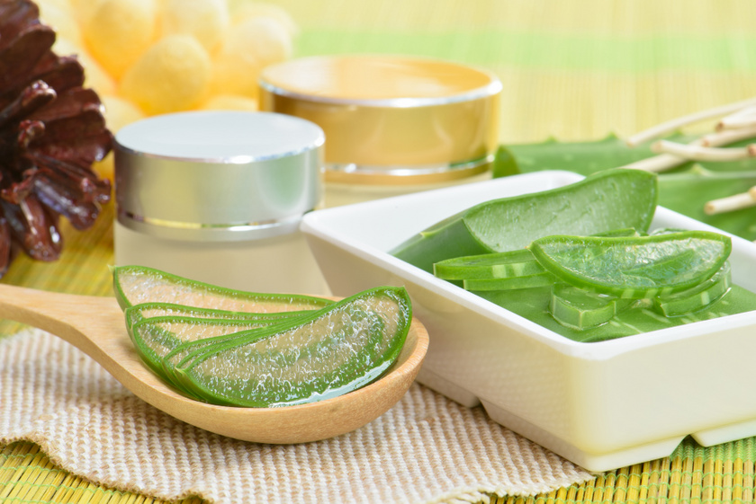 Kíméletes és népszerű gyógynövény az aloe vera, amit akár egy cserépben is tarthatsz a szobában. A növény levelét felvágva kell a sérült részre tenni, de a belőle készült gélek is segítenek a bőrnyugtatásban és a regenerálásban.