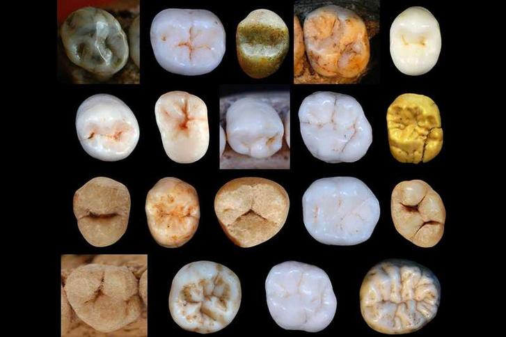 Különböző emberfélék fogai