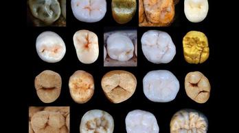 400 ezer évvel korábban válhattunk el a Neander-völgyiektől, mint eddig gondoltuk