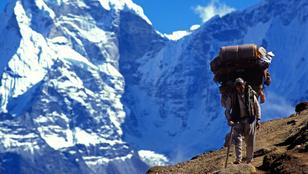 A hegyiemberek a többsávos evolúció bizonyítékai