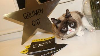 Elpusztult Grumpy Cat, a internet leghíresebb macskája