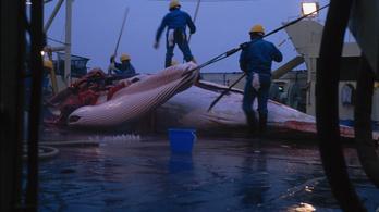 Japán környezetvédők bírósághoz fordultak a bálnavadászat leállítása miatt