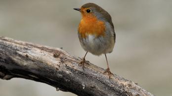Szereti az olívaolajat? Évente több százezer madár haláláért felelős!