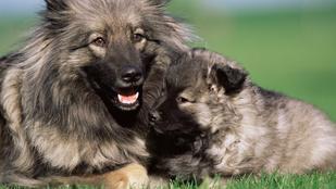 Klónoztatnád a kutyádat? Hiába, nem lesz soha ugyanolyan
