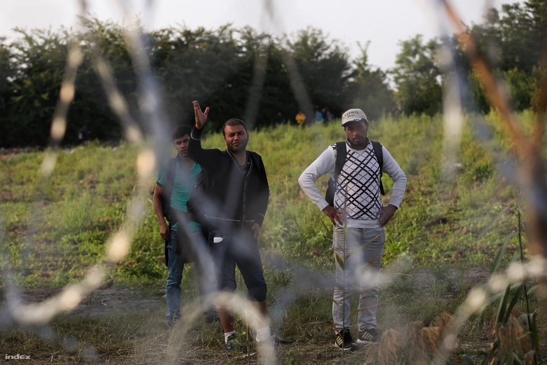 Menekültek nézik csalódottan a zöldhatáron felhúzott kerítést a teljes határzárt követő reggelen Röszke közelében
