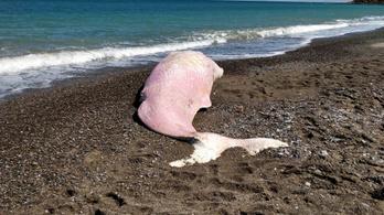 Műanyaggal volt tele a Szicíliában partra vetődött bálna gyomra
