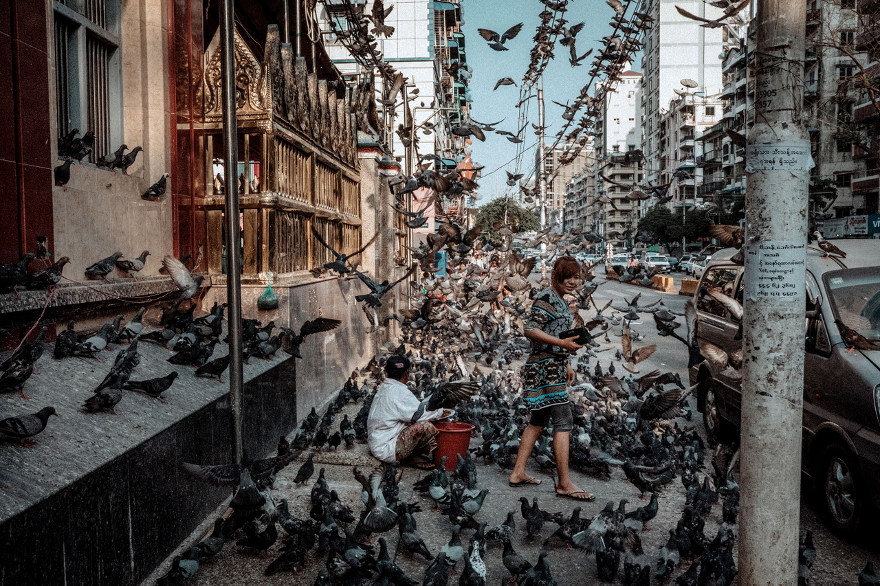 """Március 4.                         """"A galambok akár Mianmar nemzeti madarai is lehetnének, soha életemben nem láttam ennyit egy helyen, ilyen jól tartva. A buddhizmus tanai szerint a kóbor kutyák, a galambok vagy éppen az óriási pitonok etetése a """"jó karma"""" jegyében teljesen általános országszerte. Soha nem tudhatod, mi lesz a következő reinkarnációd."""""""
