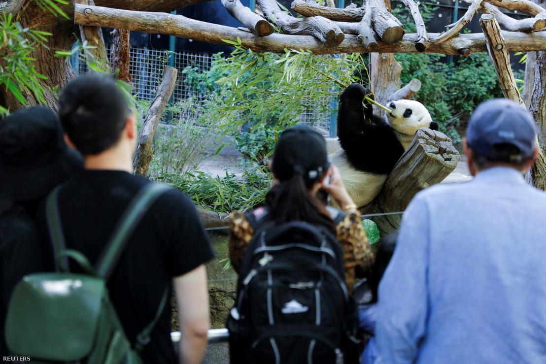 Xiao Liwu a San Diegó-i állatkertben 2019. április 18-án
