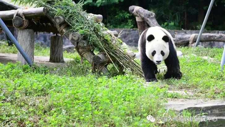 Xiao Liwu már Kínában
