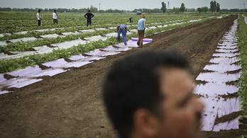 Közel megháromszorozódott a vendégmunkások száma Magyarországon