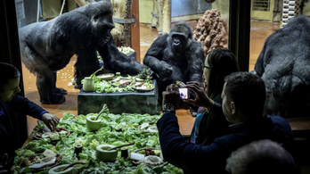 A gorilláknak szükségük van a telefonodra, de nem szelfizni akarnak vele
